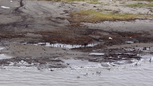 BP is scaling back its cleanup efforts from the Deepwater Horizon oilspill in areas outside Louisiana. Here, a photo from last September shows alluvial clay and tar mats on the shore of Elmer's Island, in Jefferson Parish, La. Gerald Herbert/AP