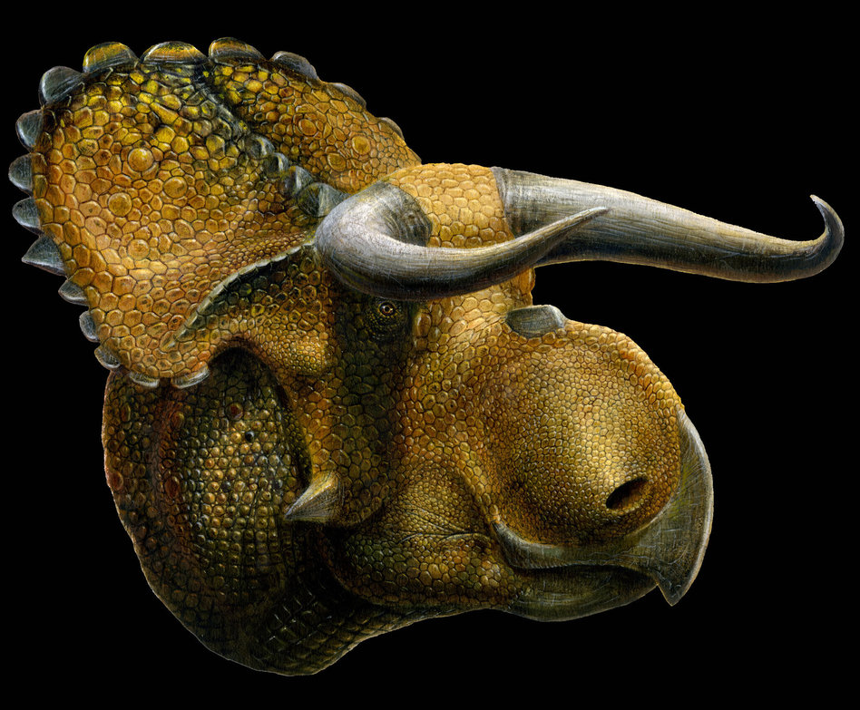 An artist's image of Nasutoceratops titusi. Lukas Panzarin for the Natural History Museum of Utah