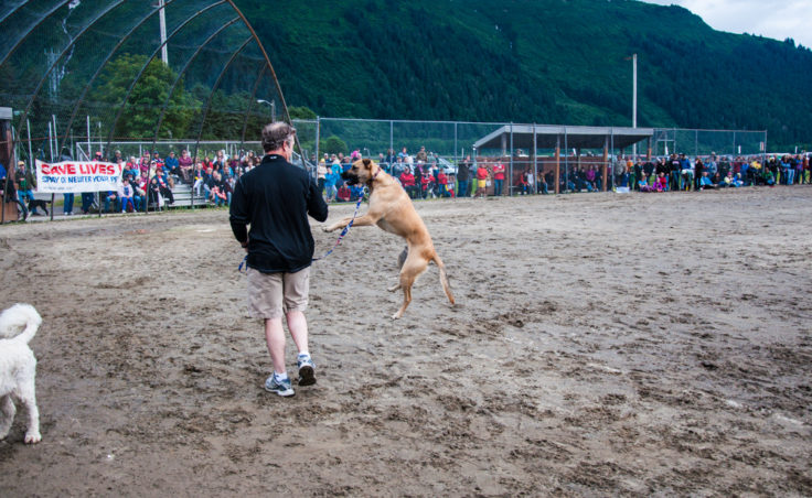 Super Dog Frisbee Contest