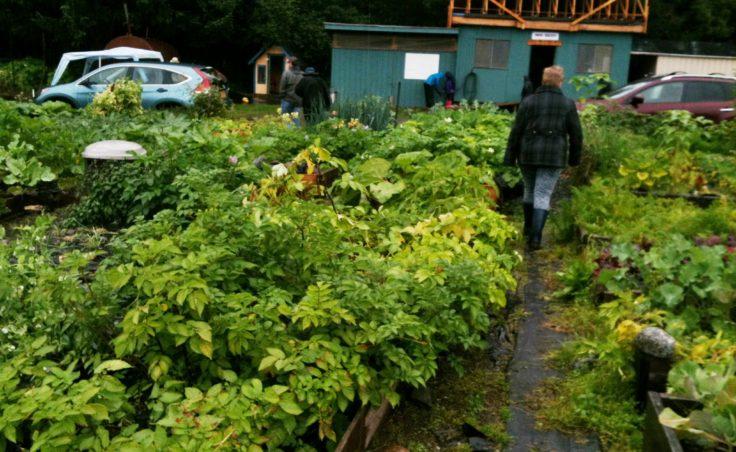 Harvest Fair13