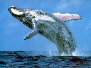 whale-300x225.jpg