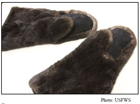 Gloves—made from a sea otter pelt that has been cut into pieces and sewn. USFWS considers this an example of significantly altered.