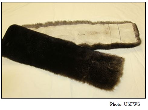 Scarf / neck roll—made from sea otter pelt that has been cut, but has not been stitched or lined. USFWS says this item is not significantly altered.