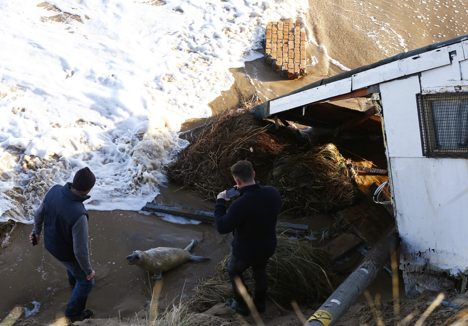Men take pictures as they try to move a seal pup away from a house, which has fallen into the sea, during a storm surge in Hemsby, eastern England, on Dec. 6. Darren Staples /Reuters/Landov