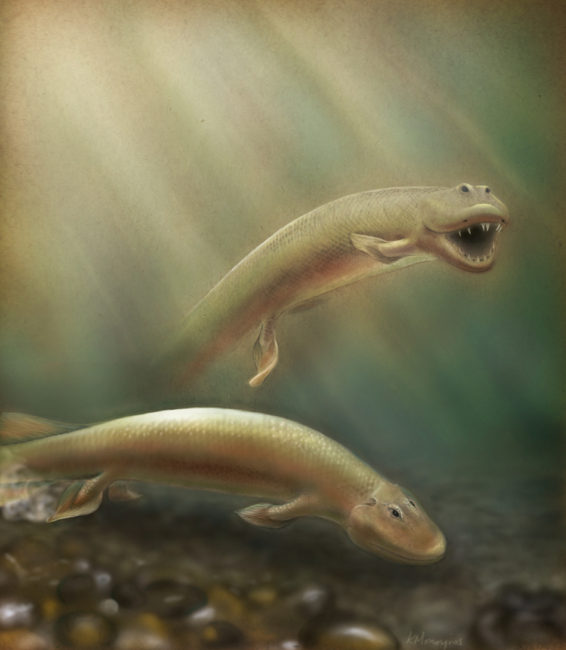 An updated rendering of Tiktaalik based on new research published in PNAS. Kalliopi Monoyios