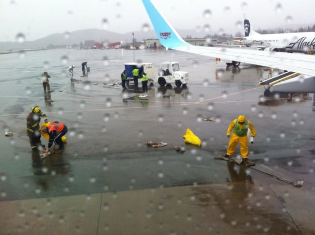 Two to three gallons of fuel spilled from Alaska Airlines Flight 76 when the auto shut-off failed to work. (Photo courtesy of Marian Call)