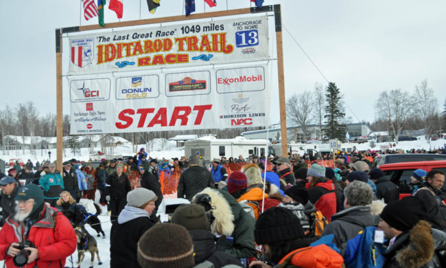 The 2014 Iditarod will start in Willow and not Fairbanks. Officials had been contemplating moving the start because of trail conditions. Photo by Patrick Yack – Alaska Public Media.