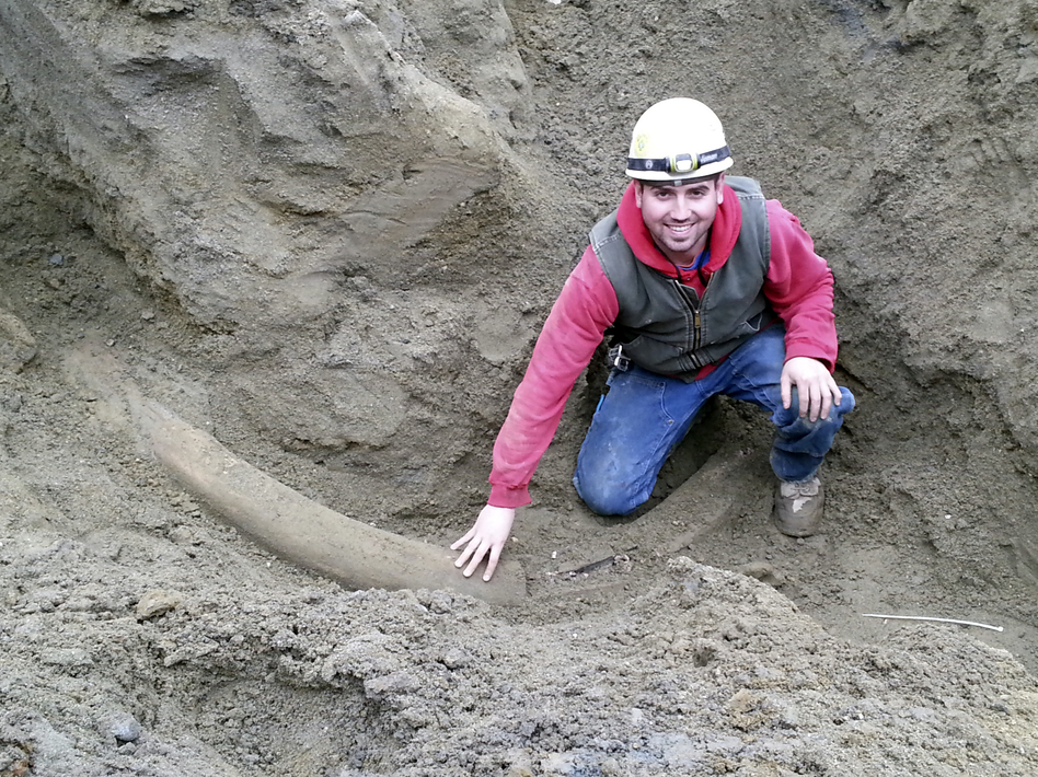 Plumber apprentice Joe Wells touching what Burke Museum officials believe is the largest, most intact mammoth tusk, ever found in the region. Uncredited/AP