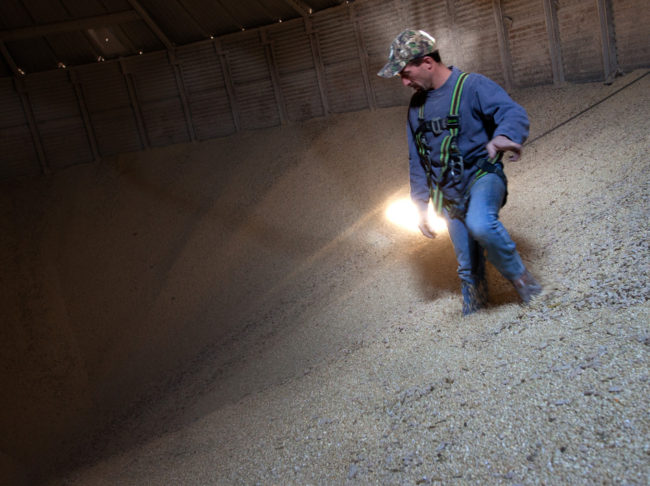 Grain Operator Austin Clubb surveys corn inside the Homestead Grain Facility at Amana Farms near Cedar Rapids, Iowa. John Poole/NPR