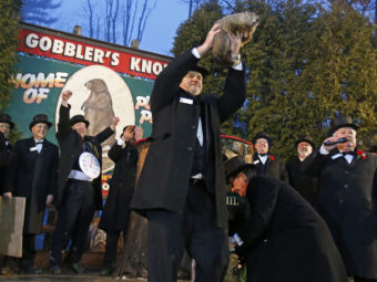 Punxsutawney Phil is held by handler John Griffiths after emerging from his burrow to see his shadow and forecast six more weeks of winter weather. Gene J. Puskar/AP