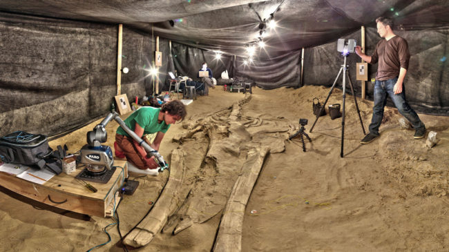 Adam Metallo, left, and Vince Rossi from the Smithsonian's Digitization Program use a high-resolution laser arm and medium-range laser scanners to document one of the most complete fossil whales at the site in Chile. Smithsonian Institution