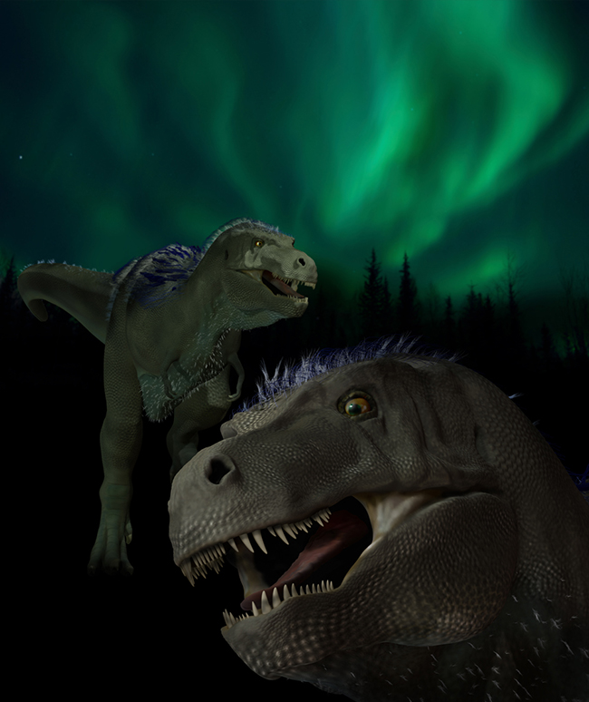 An artist's rendition of the top dinosaur discovered on Alaska's North Slope, Nannuqsaurus hoglundi. (Artwork by Karen Carr)