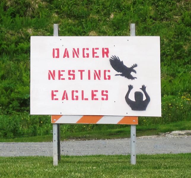 danger eagles nesting