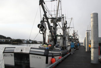 Seiners wait at the newly reopened ANB harbor for the 2014 Sitka Sound sac roe herring fishery to open. (KCAW photo/Rachel Waldholz)