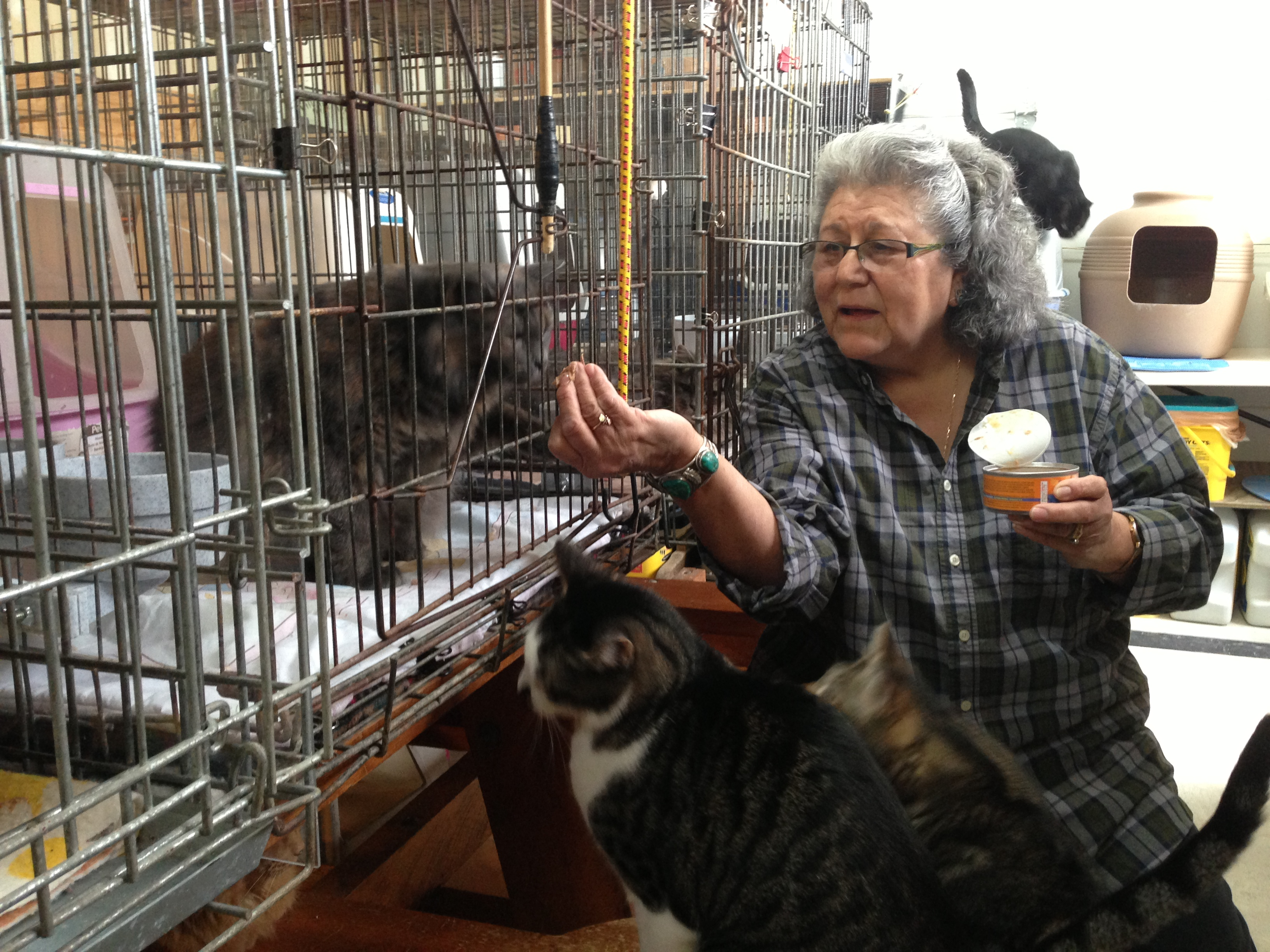 Dolores Klinke feeds cats in her garage at St. Frances Animal Rescue. (Photo by Shady Grove Oliver/KSTK)