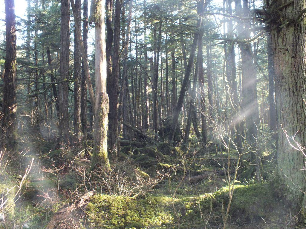 Pederson Hill woods