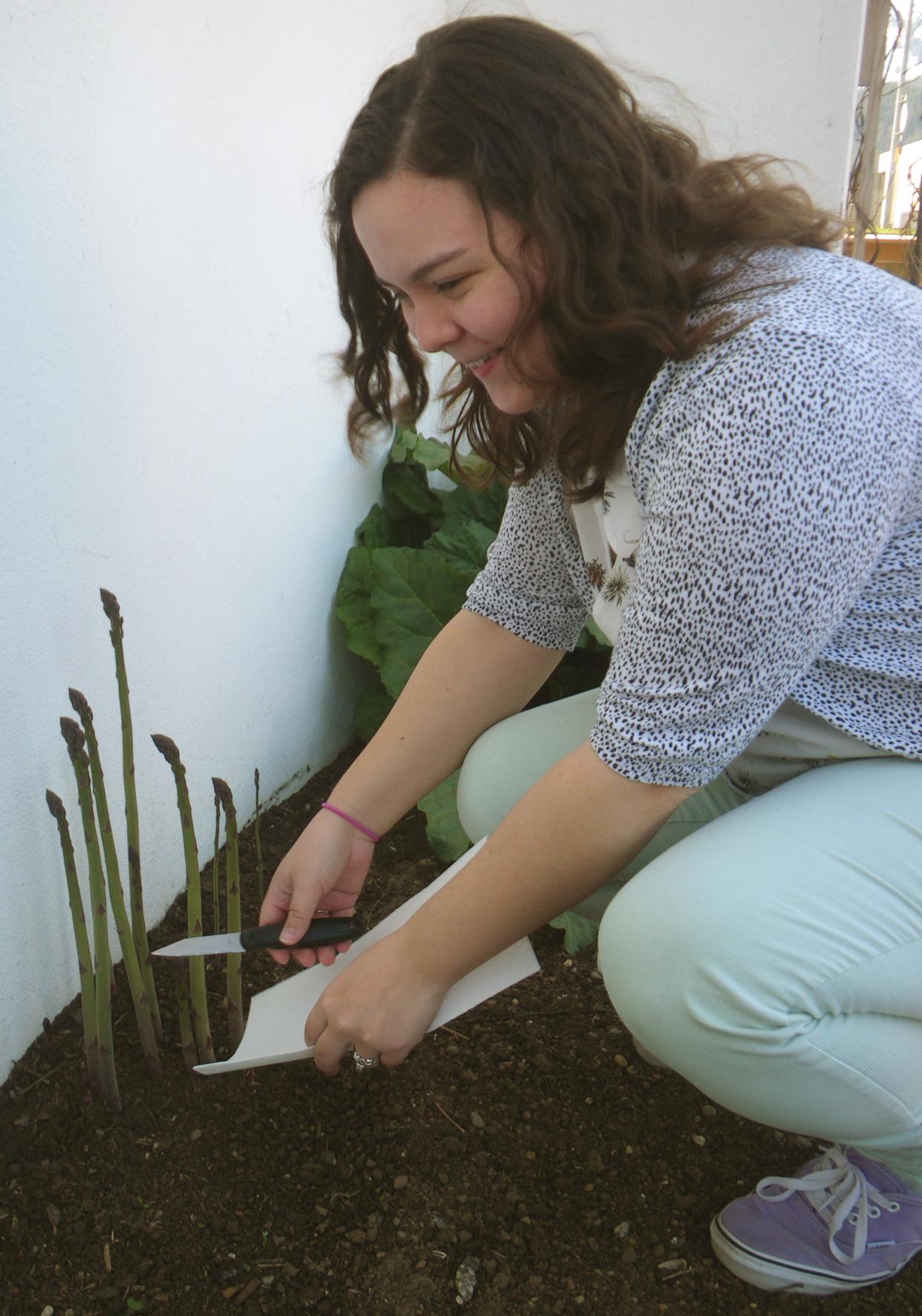 Sarah harvests asparagus