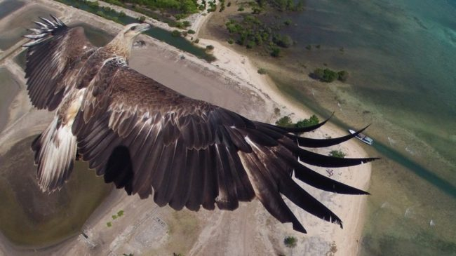 An eagle flies over Bali's Barat National Park, in this award-winning image taken by a camera attached to a drone. capungaero/Dronestagram