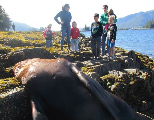 Some children came to watch the sea lion necropsy with their moms on Thursday morning. (Photo by Leila Kheiry/KRBD)