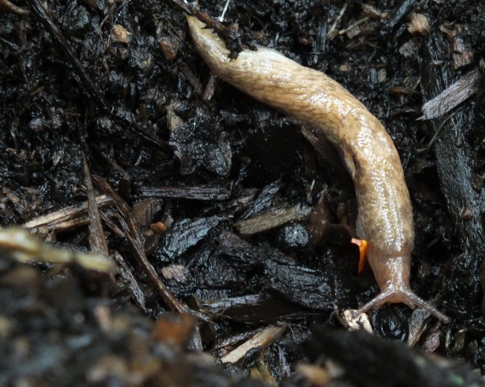 Slug!