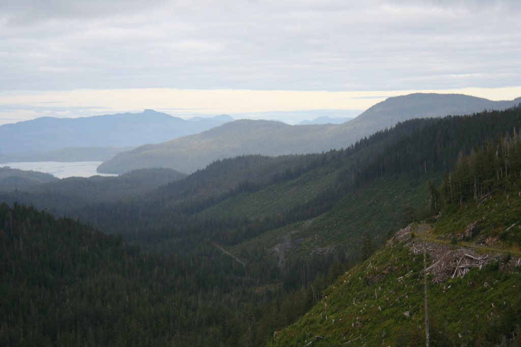 Clearcuts and old-growth forests are part of the view of Indian Valley on Prince of Wales Island. The Forest Service just announced three more timber sales in the Island's Big Thorne area.