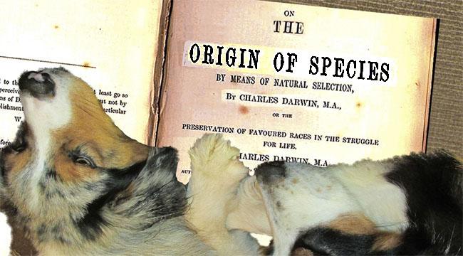 OriginSpecies.GaWy_650x360_edited-1