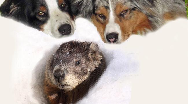 Groundhog.GaWy_650x350