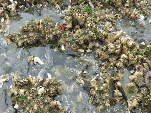 Unalaska tide pool