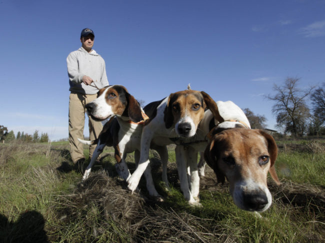 Josh Brones walks his hunting dogs, Dollar (from left), Sequoia and Tanner, near his home in Wilton, Calif., in 2012. Rich Pedroncelli/AP