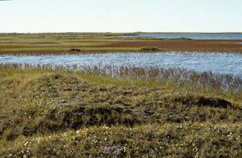 Pond on ANWR coastal plain. (Photo courtesy of U.S. Fish and Wildlife Service)