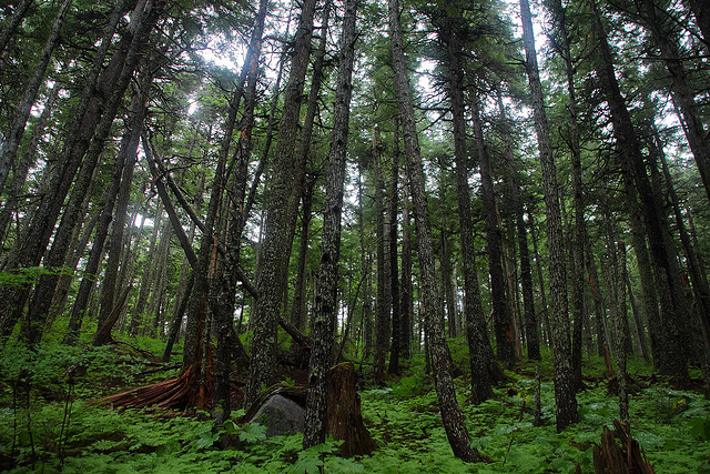 Haines State Forest (Photo by ~dgies/Flickr)