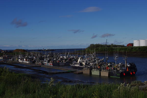 Russian Orthodox and Old Believer boats lined up in the Dillingham boat harbor. (Photo by Molly Dischner/KDLG)