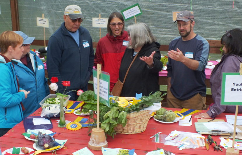 Judges debate criteria and potential awards for one entry during the 2015 Harvest Fair.