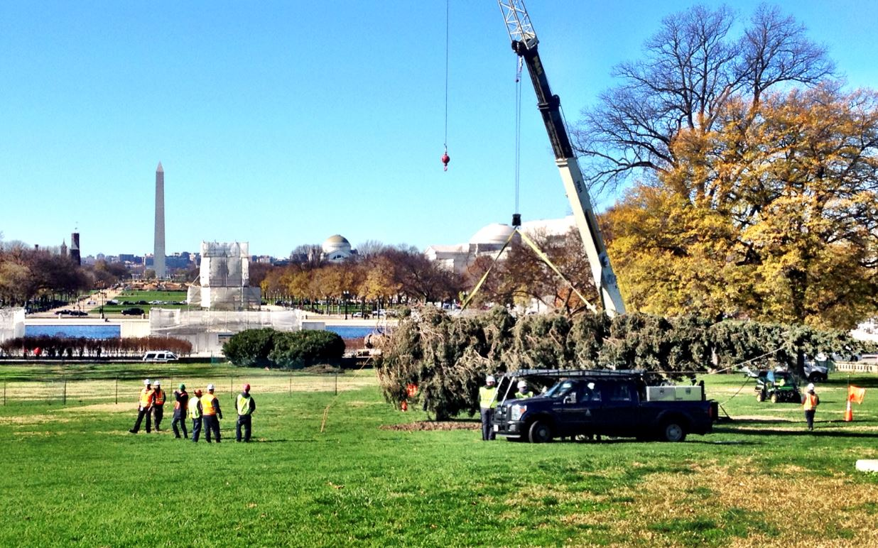 The Chugach tree arrived at the Capitol but winds kept it horizontal all day. (Photo by Liz Ruskin/APRN)