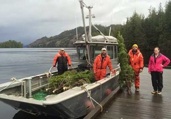Companion Christmas Tree Harvest Crew near Ketchikan