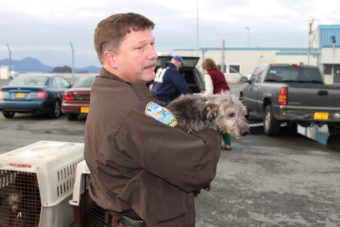 Eleven homeless pups landed in Sitka on Thursday (11-5-13). The dogs, recovered from Ketchikan, will be ready to adopt shortly. (Photo by Brielle Schaeffer/KCAW)