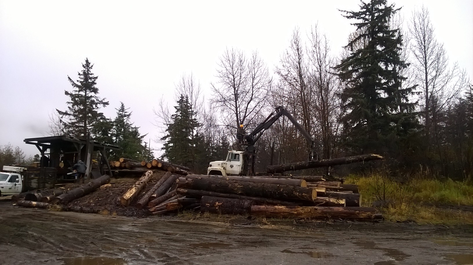 The Stump Company timber operator in Haines