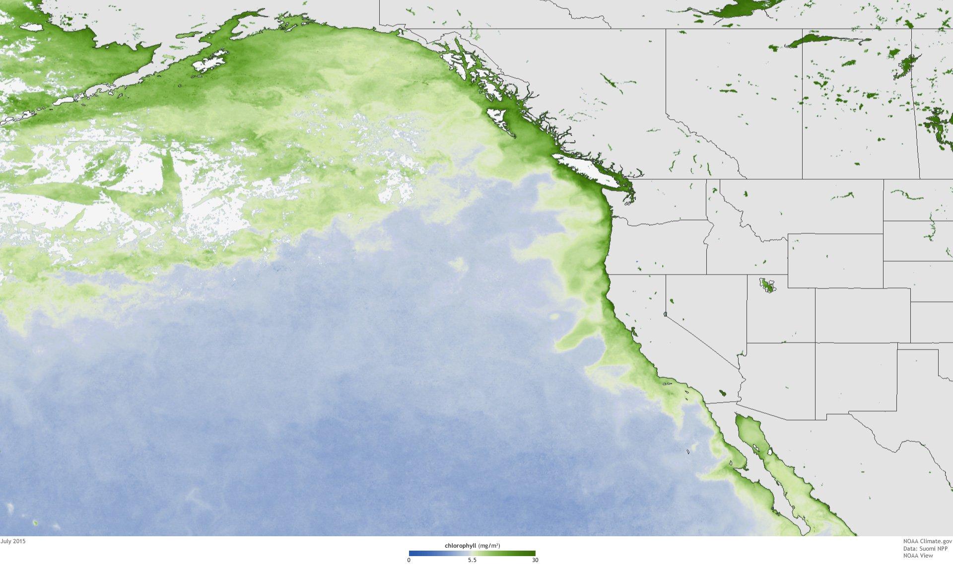 West coast algae bloom
