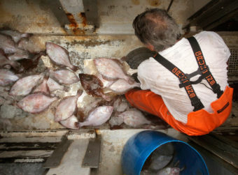 A fisherman shovels grey sole, a type of flounder, out of the hold of a ship at the Portland Fish Pier in Maine, September 2015. New research finds the ability of fish populations to reproduce and replenish themselves is declining across the globe. The worst news comes from the North Atlantic, where most species are declining. Gregory Rec/Portland Press Herald via Getty Images