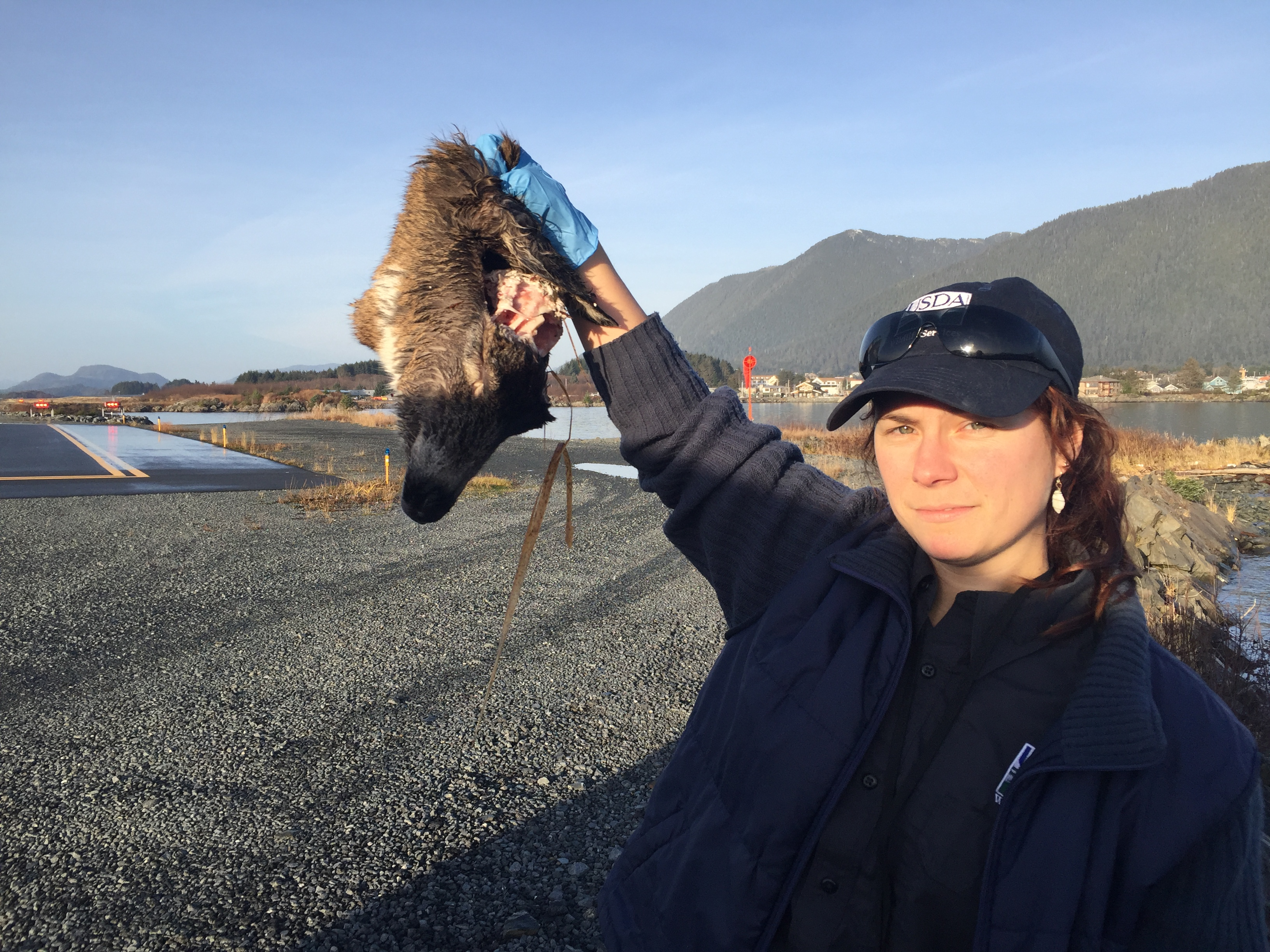 Since November, Bauscher has been seeing one to three deer wash up on the runway every week. (Photo by Emily Kwong/KCAW photo)