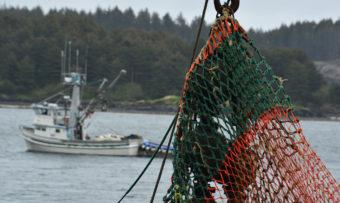 Salmon opener in Kodiak commercial fishing gear