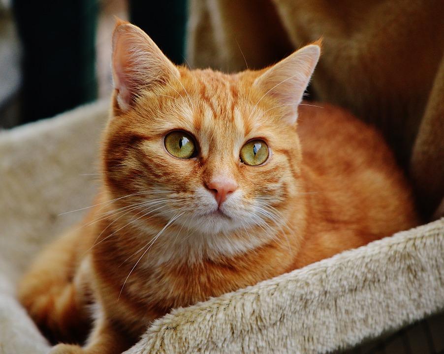 cat-1044772_960_720