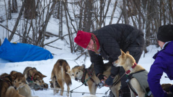 Aliy Zirkle handles her dogs during a rest in Galena along the Yukon River, her last stop before heading towards Nulato. Late in the night, as she approached Nulato, Zirkle was attacked by a snowmobiler a few miles outside the small community. Zachariah Hughes/Alaska Public Media