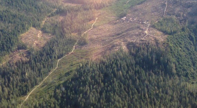 A Tongass National Forest clearcut is shown in this 2014 aerial view. A new court decision limits logging on roadless areas of the forest. (Photo by Ed Schoenfeld/CoastAlaska News)