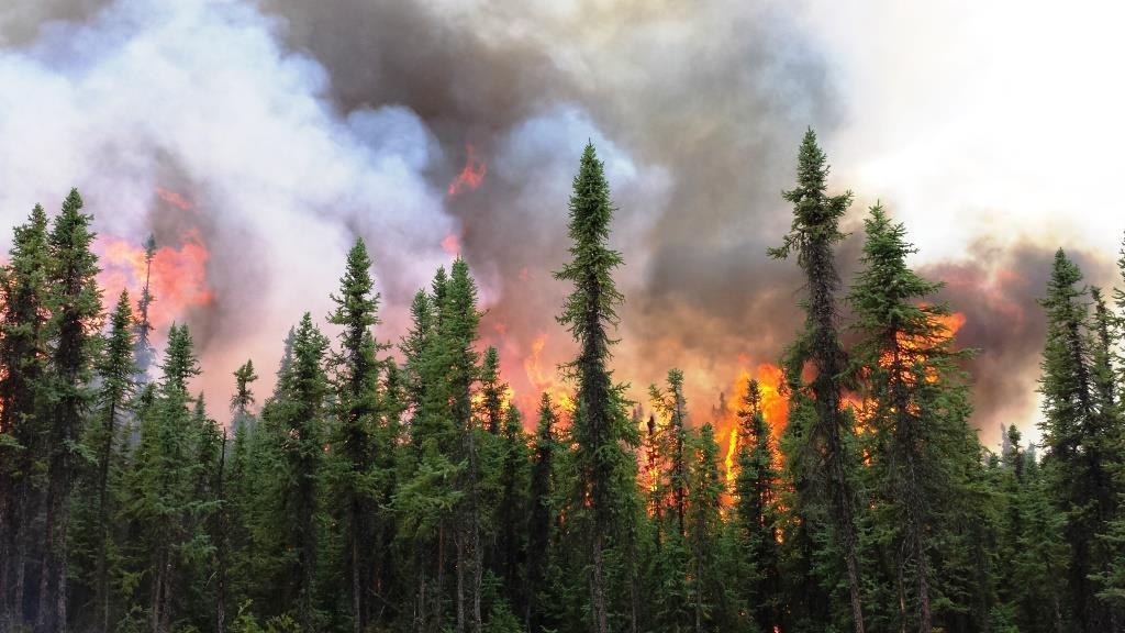 Aggie Creek Fire wildfire, July 7, 2015