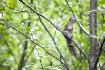 A squirrel explores near Duck Creek as it flows past the Nancy Street wetland in the Mendenhall Valley on May 20, 2016, in Juneau, Alaska. The Alaska Department of Environmental Conservation has awarded a watershed coalition a nearly $10,000 grant to collect water quality data to measure the effectiveness of environmental improvements on the creek. (Photo by Rashah McChesney/KTOO)