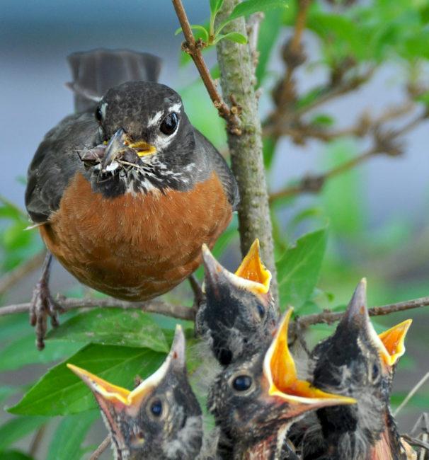 crowded bird nest