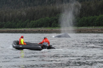 Responders watch as entangled humpback surfaces
