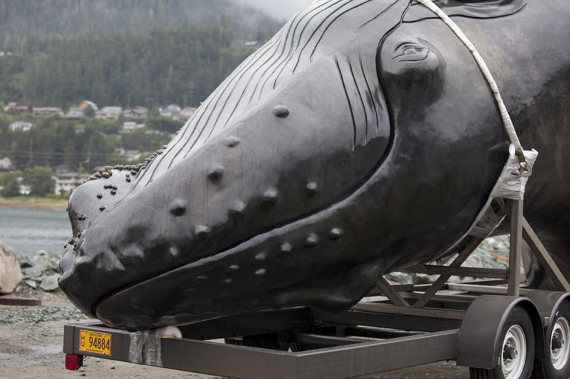 A 25-foot whale sculpture arrived at the Auke Bay ferry terminal and was delivered to a temporary spot under the Douglas bridge on August 8, 2016, in Juneau, Alaska. The life-size bronze sculpture of a humpback whale will eventually be erected in an infinity pool at Juneau's waterfront. (Photo by Rashah McChesney/KTOO)