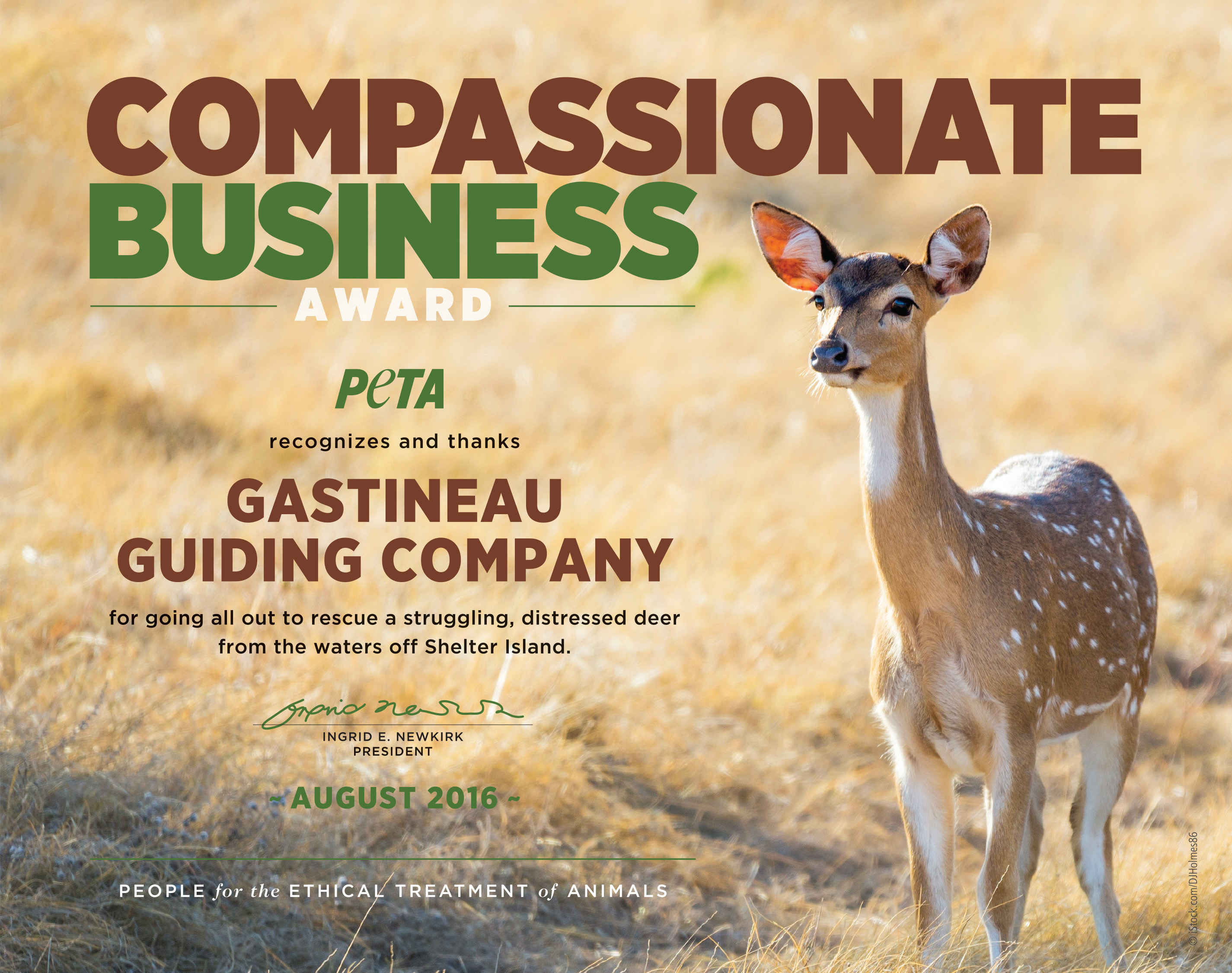 A copy of the Compassionate Business Award that PETA will send the Juneau Gastineau Guiding Co. (Courtesy of People for the Ethical Treatment of Animals)